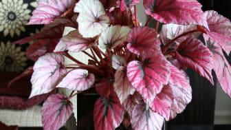 Månadens blomma - september 2011