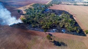 De sidste rygende rester af et stykke af den såkaldte Chaco-skov, her i Argentina, der er omdannet til sojaplantager. Foto: Mighty Earth