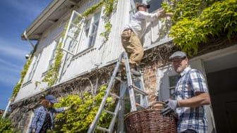 Under handledning av Gunnebos trädgårdsmästare får volontärerna hjälpa till med arbete i trädgårdarna och i kulturlandskapet på 1700-talsanläggningen. Foto: Kajsa Sjölander