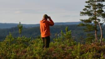 Priset på skogsmark ökar – trots Corona