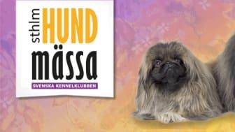 Stockholm Hundmässa 2015