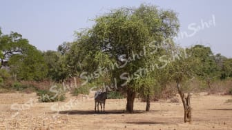 Trees provide shade as well as produce