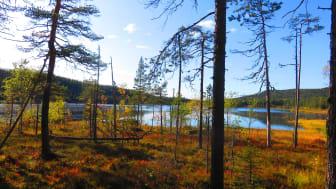 Övernattning i Björnlandets nationalpark