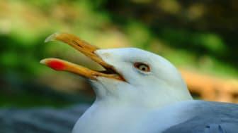 Fågel med ögonskador