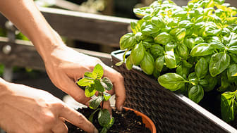Gärtnern im Einklang mit der Natur