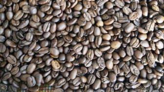 Fra 1. januar 2020 bliver det muligt for fødevarevirksomheder at donere kaffe til humanitære formål og slippe for afgiften.