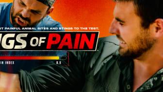 Kings of Pain_HISTORY