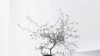 Kombinieren Blockglas und Porzellan: Daniel Debiasi und Federico Sandri.