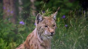 PaulCamper onthult de beste Europese wildlife bestemmingen in 2021