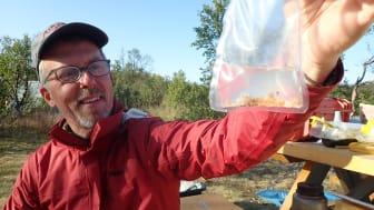 Mark Wipfli (University of Alaska Fairbanks) med pukkellaksegg funnet i magen på lakseyngel (Foto: Kathy Dunlop)