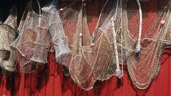Förlorade fiskeredskap kan fastna i bottenstrukturer längs kuster och i djupare vatten, och utgör ett hot för fiskar, däggdjur och fåglar. Foto: Scandinav Bildbyrå