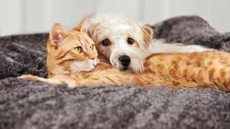 Hund und Katze in Harmonie