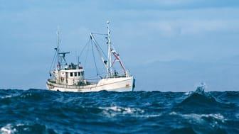 Vår julgåva går till WWFs arbete för ett levande hav!
