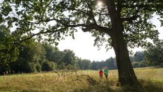 Unterwegs in der Schorfheide im Barnimer Land. Foto: TMB-Fotoarchiv Yorck Maecke.