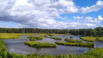 En av lokalerna i studien var Dalkarlskärret utanför Uppsala. I det omgivande landskapet finns mycket skog men området närmast stranden är ganska öppet, vilket är positivt för fåglarna. Foto: Ineta Kačergytė