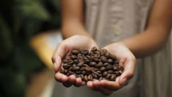 Kaffebönor finns i olika sorter