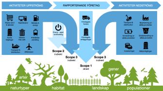 Projekt EcoComp