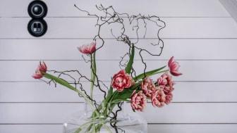 Den 15 januari firas Tulpanens Dag och i år infaller dagen på en fredag. Foto: Åsa Myrberg