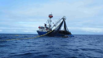 Guam meeting: disaster for tuna