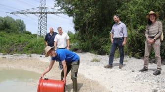 Christian Köbele vom LBV setzt mehrere Hundert Kaulquappen in das Gewässer auf einer ökologisch aufgewerteten Ausgleichsfläche der Bayernwerk Netz GmbH.