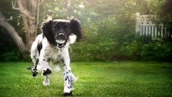 Probiotics for pets could be a game-changer for brands in terms of differentiating and taking their premium pet food to the next level, claims Chr. Hansen.