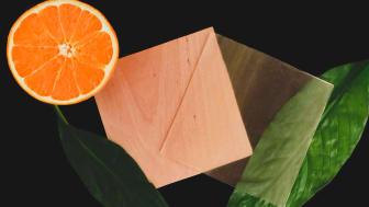 Forskarna använder ett ämne i skalet på citrusfrukter för att framställa det genomskinliga träet. Foto: Celine Montanari.