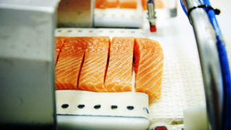 Norwegian salmon farming sees continued drop in antibiotics use