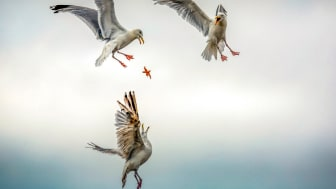 © Caroline Paux, France, Shortlist, Open competition, Natural World & Wildlife, SWPA 2020