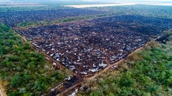 Chacoen er meget rig på dyre- og planteliv. Når den bliver ryddet går det hårdt udover biodiversiteten.