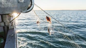 Fiskarna från Thorupstrand