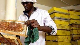 Honey Bees blev vinnare av Nestlés Creating Shared Value Pris 2014