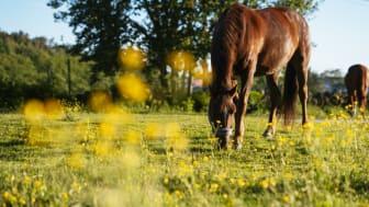 Bristfälligt underlag om hästars påverkan på övergödning