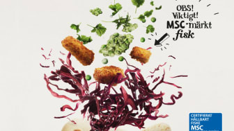 Findus stärker sitt MSC-utbud med ny fiskprodukt