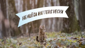 Idag startar Hemlösa katters vecka – rekordmånga katthem engagerar sig!