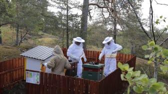 Botkyrkabyggens bikupor i Storvreten