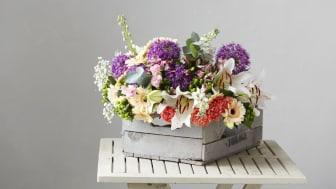 Blomsterlandet fyller 30 år. Det firas i butik i tre veckor (v 45-48) med jubileumspriser och tårtkalas under finalveckan.