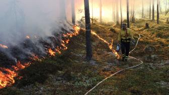 Bild från tidigare naturvårdsbränning. Foto: Länsstyrelsen i Dalarnas län