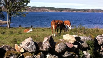 Björshuvudets naturreservat.