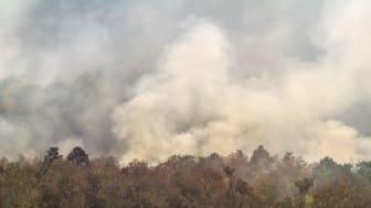 Skovbrandene i Amazonas ser i år ud til at blive endnu værre end sidste år - derfor er der pres på Brasilien for at standse skovbrandene