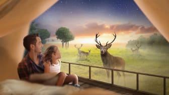 """Nya boendet i Skånes Djurpark, """"Wild Lodge"""", tar hemester och glamping till nästa nivå."""