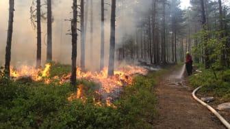 Bränningen är noga planerad och sker i ett område som dels har naturliga gränser av vatten och vandringsled, dels gränser som bevattnas under bränningen.