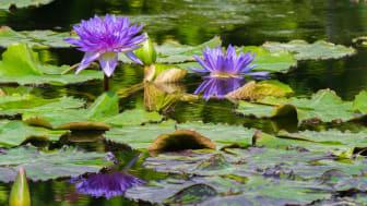 Skab en smuk have med vand