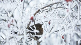 Fågellivet i Ekeby våtmark