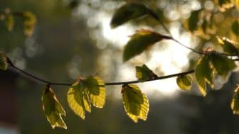 Årstiderna lovar att ha ett CO2-räkenskap i balans från och med 2020