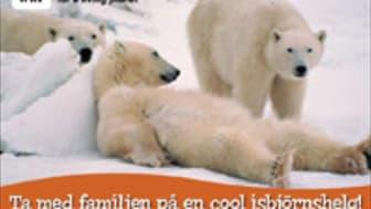 Isbjörnshelg för hela familjen på Naturhistoriska riksmuseet