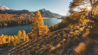 Goldiger Herbst über dem Silsersee mit seine Lärchenwaeldern