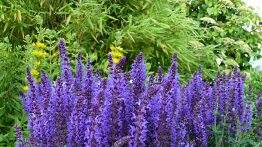 Månadens Blomma juli 2010
