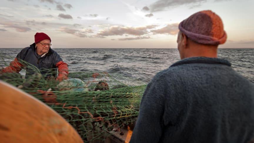 Äntligen kan du köpa svensk MSC-märkt torsk från Östersjön!