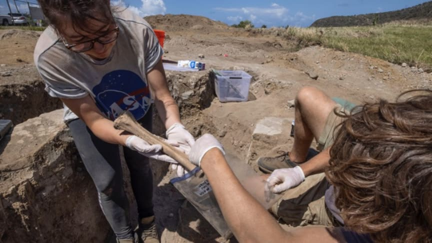 Northumbria expert leads ground-breaking forensic study on 18th century Caribbean graveyard