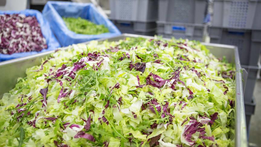 Valmiiksi pestyt salaatit valmiina seuravaan vaiheeseen
